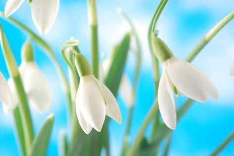 Wiosna się Kowary 5