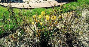 Słonecznie, 76-212 Rowy 3