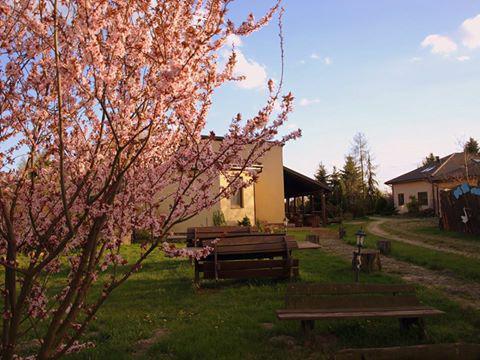 Wiosna już w Biskupice 1