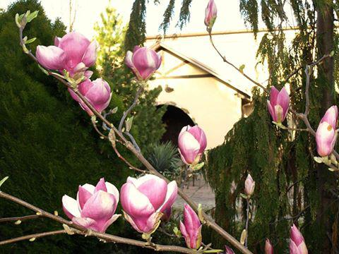 Wiosna już w Biskupice 3