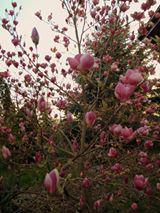 Wiosna już w Biskupice 5